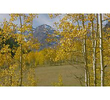 Aspen at Maroon Bells Photographic Print