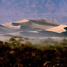Sculptured  Dunes by Varinia   - Globalphotos