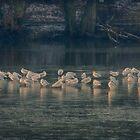Shimmering Gulls by Glen Allen