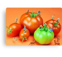 Tomato Harvest Canvas Print