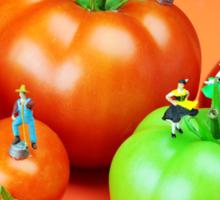 Tomato Harvest Sticker