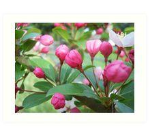 Pink Buds Art Print