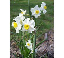Daffodils 2 Photographic Print