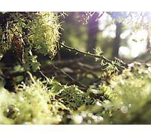 Forest Fairytale Photographic Print
