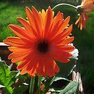 orange sunshine by donald beynon