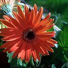 orange sunshine 2 by donald beynon