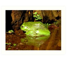 Frog Mirror - Ashby, New South Wales Art Print