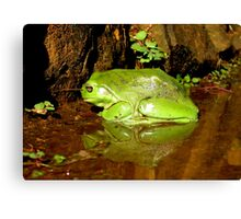 Frog Mirror - Ashby, New South Wales Canvas Print