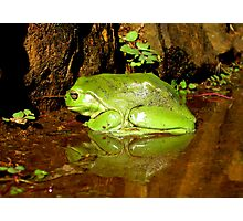 Frog Mirror - Ashby, New South Wales Photographic Print