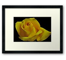 The Breast Cancer Rose Framed Print