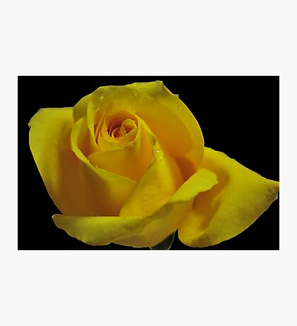 The Breast Cancer Rose Photographic Print