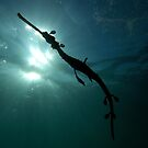 Seadragon Silhouette by MattTworkowski