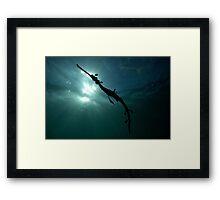 Seadragon Silhouette Framed Print