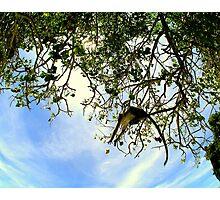 MONKEY CATCH.... Photographic Print