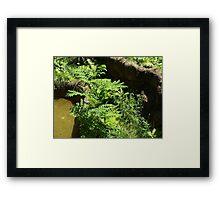 Monkey Habitat Framed Print