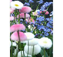Delicately soft Photographic Print