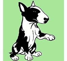 Coloured English Bull Terrier  Photographic Print