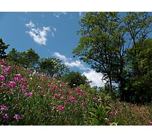 More Beautiful Weeds Photographic Print
