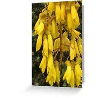 Kōwhai Tree Greeting Card