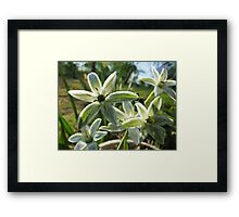 Tiny Whites Colored Pencil Framed Print