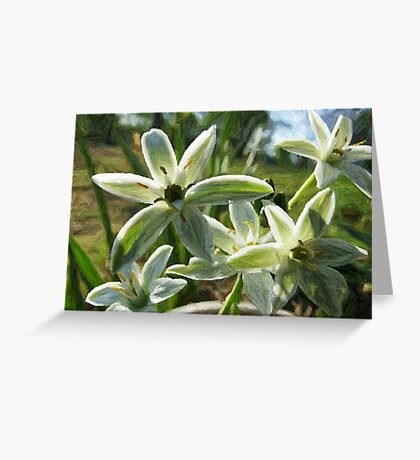 Tiny Whites Colored Pencil Greeting Card