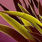 Iris Leaves by Jim  Darnall