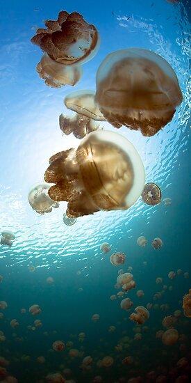 Jellyfish Lake by aabzimaging
