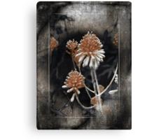 Desert Succulent Canvas Print