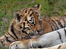 Relaxing with Mama by Krys Bailey
