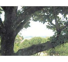 Through the Leaves Photographic Print