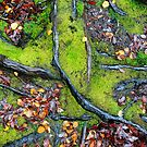 Forest Floor by Harry Oldmeadow