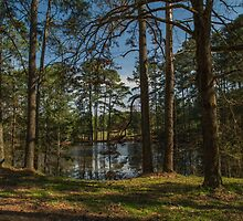 Pines At The Pond by Susan Nixon