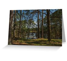 Pines At The Pond Greeting Card