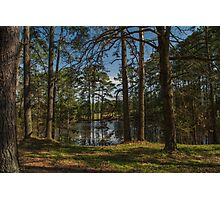 Pines At The Pond Photographic Print