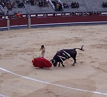 Bull Fight in Madrid by CherylBee
