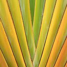 Travellers Palm Abstract by Teresa Zieba
