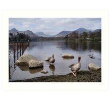 Geese on Keswick Lake Art Print