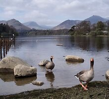 Geese on Keswick Lake by Deborah  Bowness