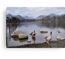 Geese on Keswick Lake Metal Print