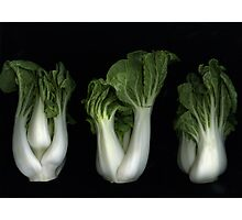 Bok Choy Photographic Print