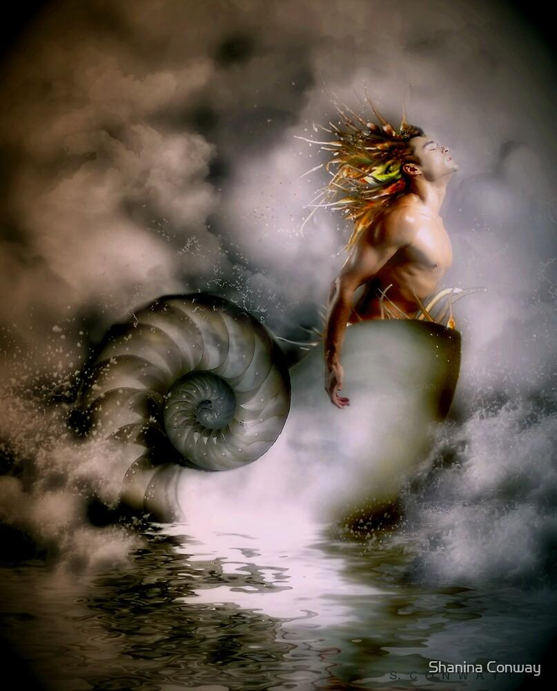 Nerites Sea God by Shanina Conway