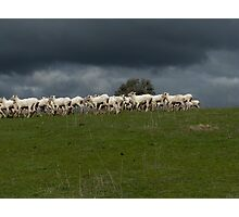from a time of pastures green ... Photographic Print