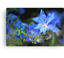 blue lechenaultia Canvas Print