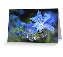 blue lechenaultia Greeting Card