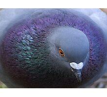 Pigeon Eyes Photographic Print