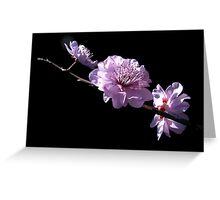 The Poetry of Prunus. Greeting Card