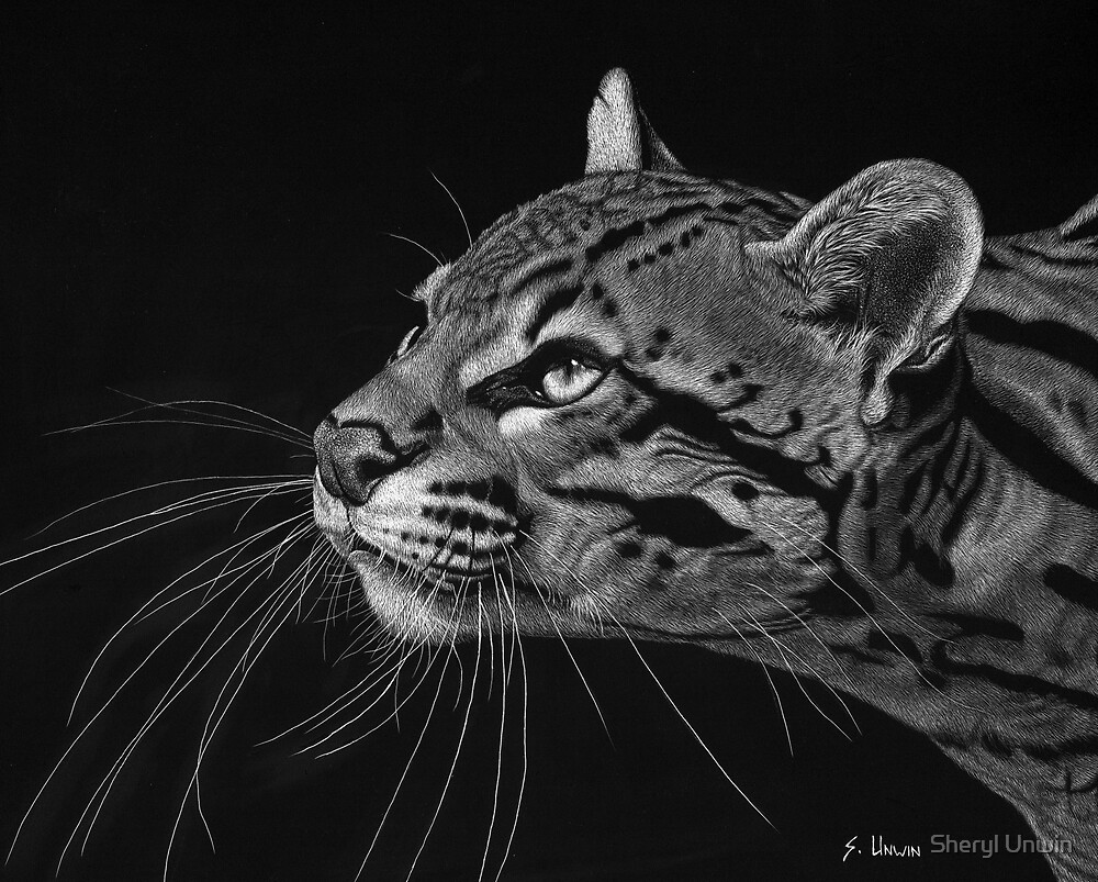 Billy the Ocelot by Sheryl Unwin
