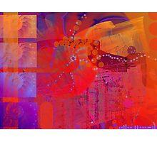 Nautilus Photographic Print