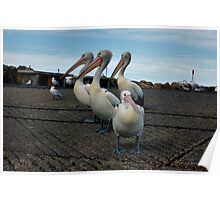 PELICAN FAMILY Poster