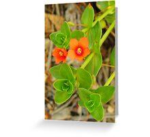 Tangerine Wildflower Greeting Card